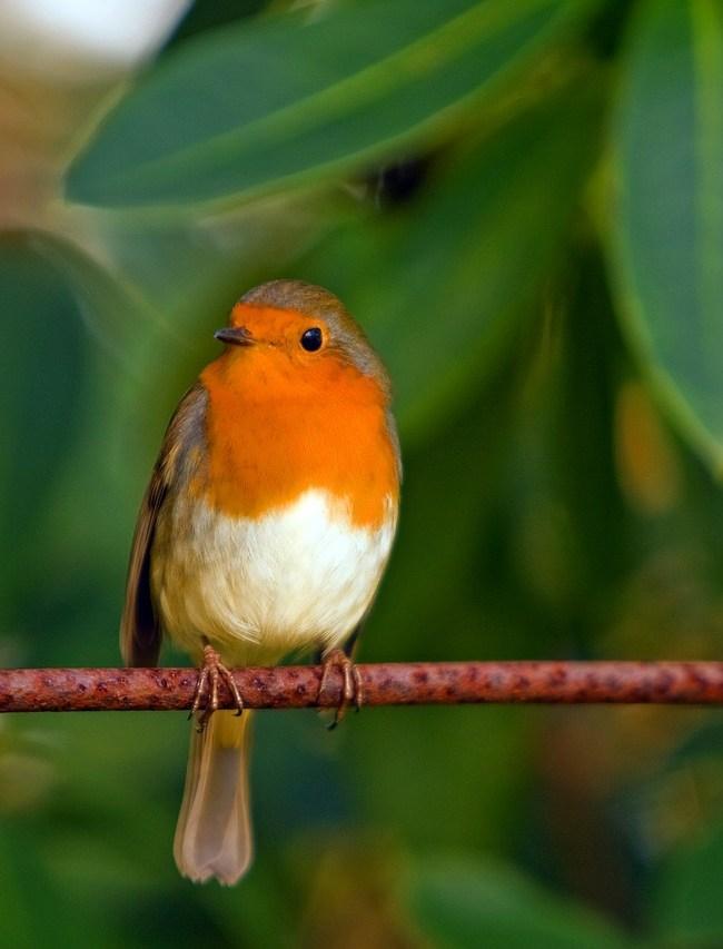 Attract UK Wildlife to your Garden