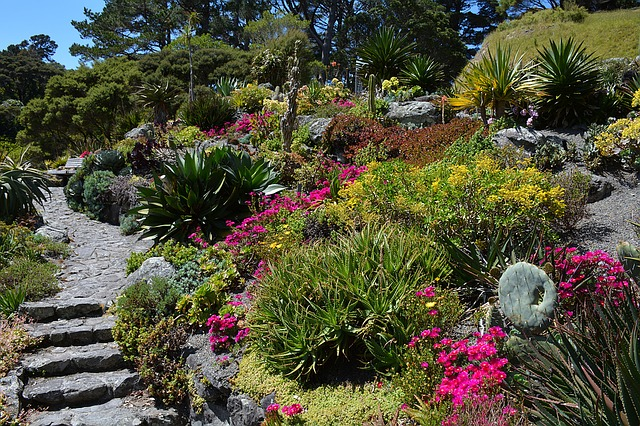 Xeriscaping: A botanical garden with drought tolerant plants