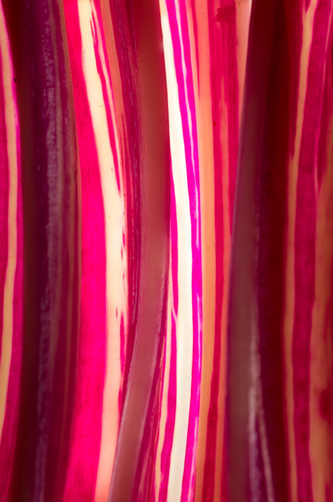 Rainbow Chard stems by Marius Grose