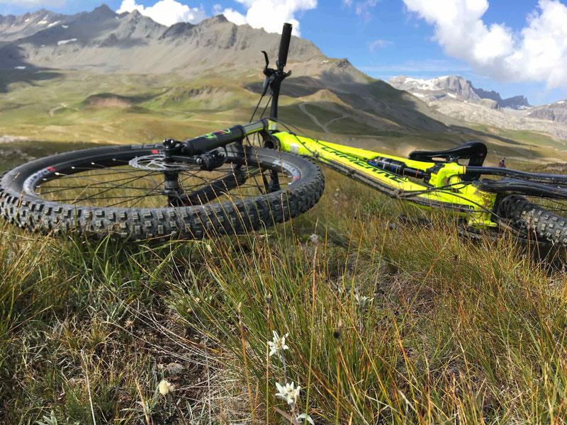 Finding Edelweiss by bike