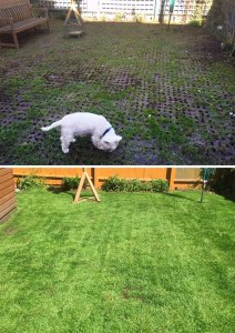 Richard Jackson's Lawn Magic: Before and After