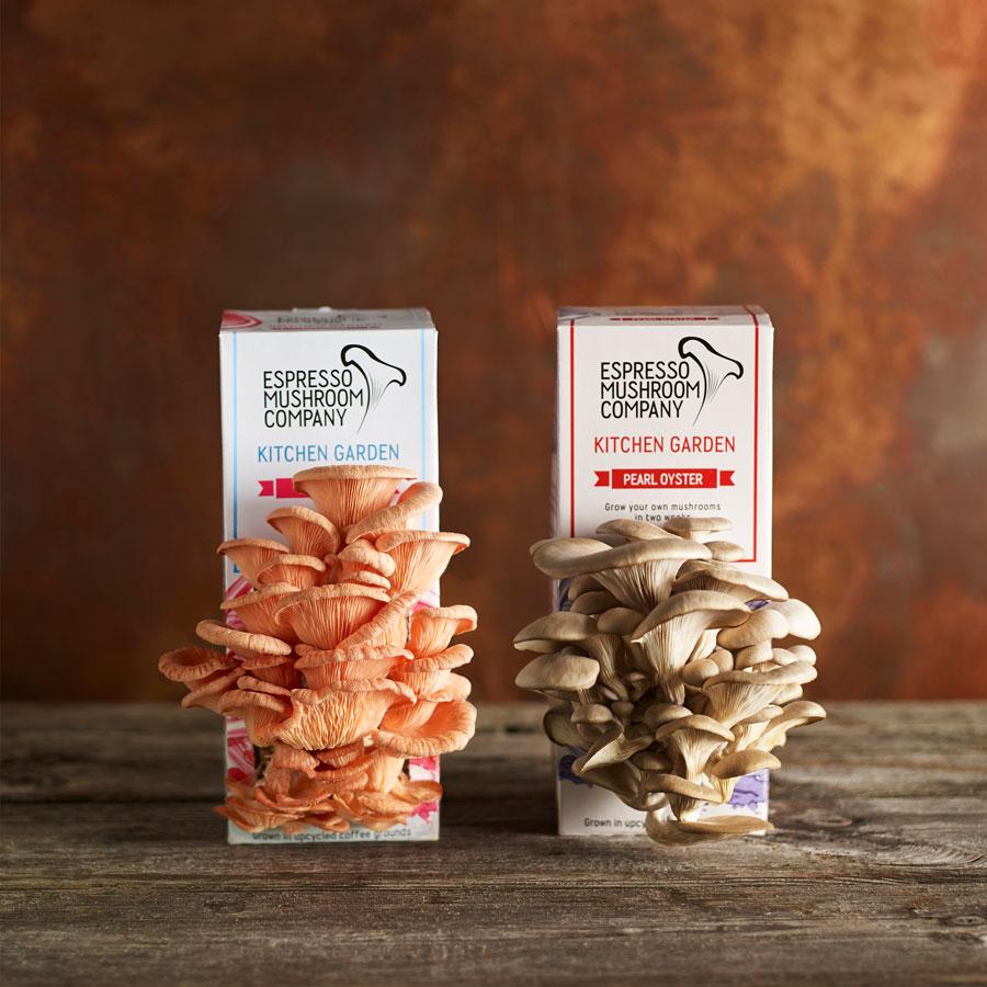 Grow your own mushrooms: Espresso Mushroom Company