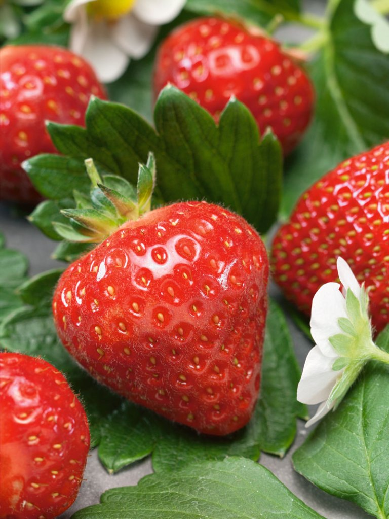 QVC Gardening April 2019 highlights: Colossus strawberry