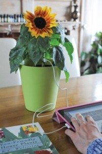 Plant-related April Fools Day pranks: PowerFlower UBS Sunflower