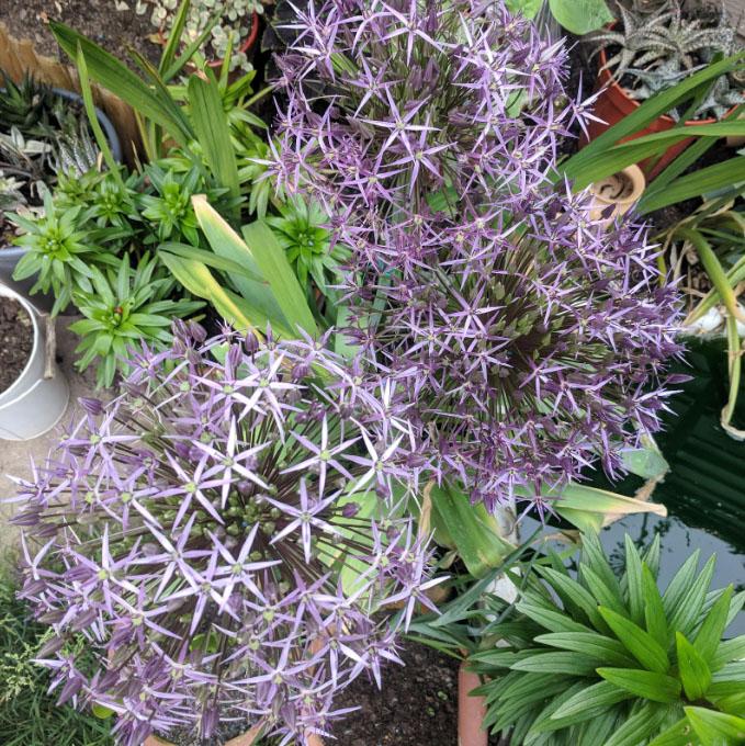 Simon Mitchell - Gardening Journey