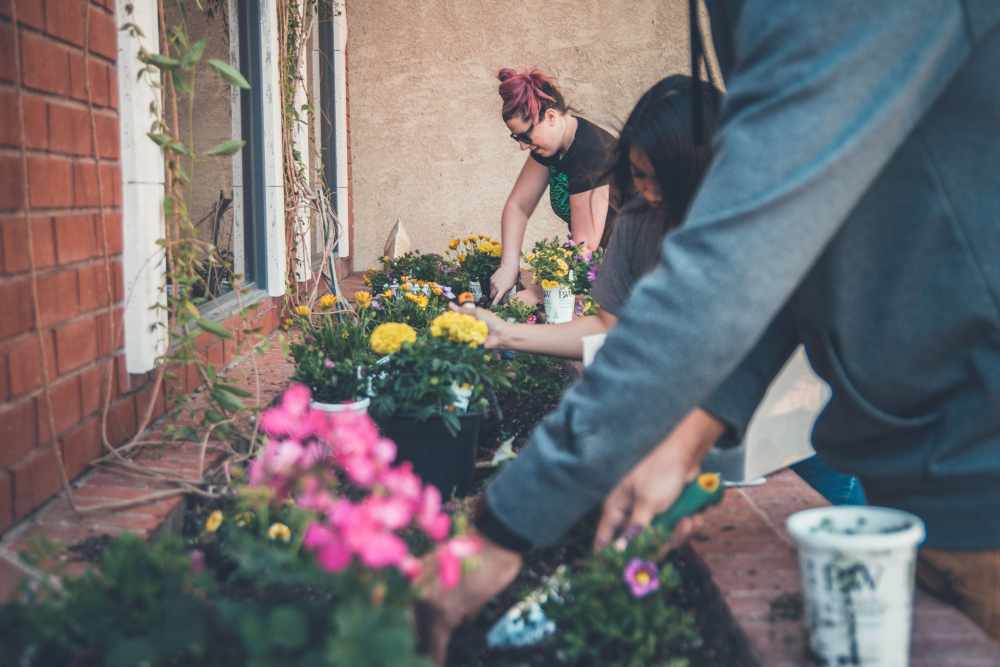 People planting in raised beds