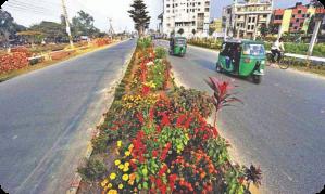 Motorway central reservation planting