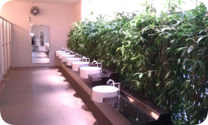 Plants in public toilets