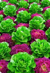 Decorative fruits and vegetables
