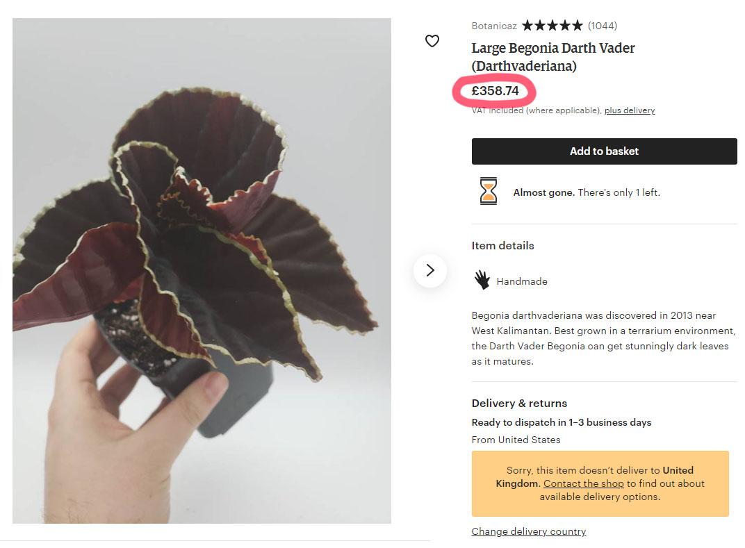 Begonia Darth Vader Etsy