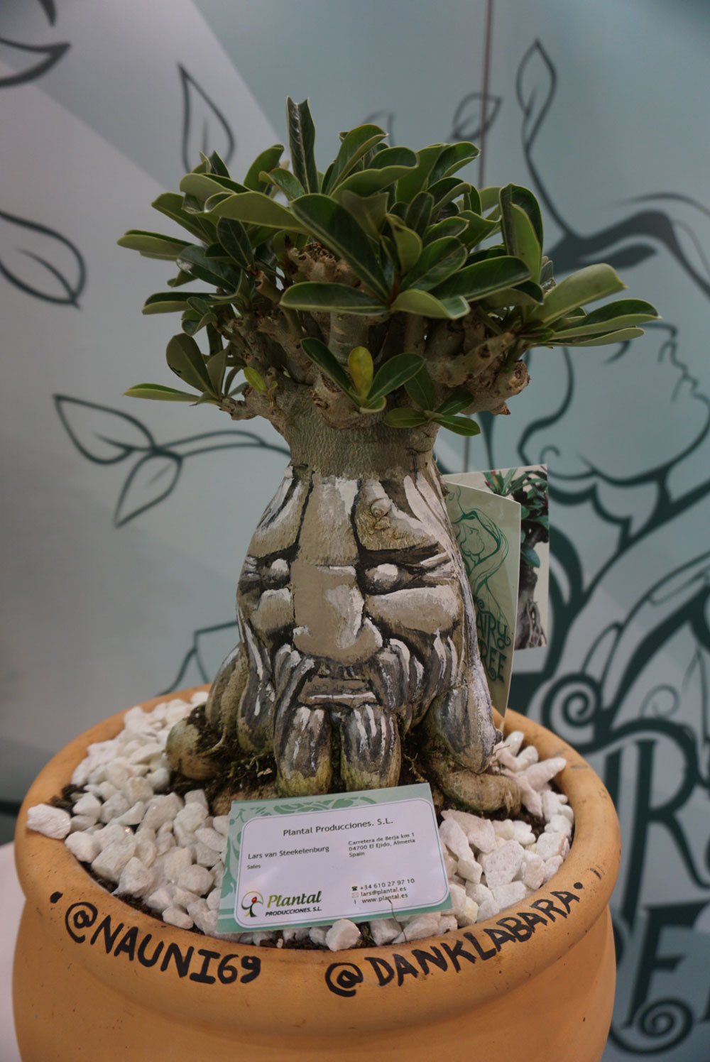 Face painted on a plant