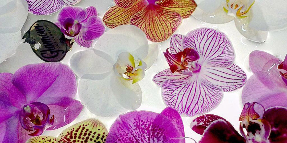 Orchid feature image