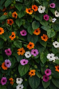 Thunbergia and planter