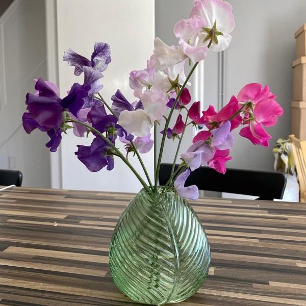 Sweet peas in vase