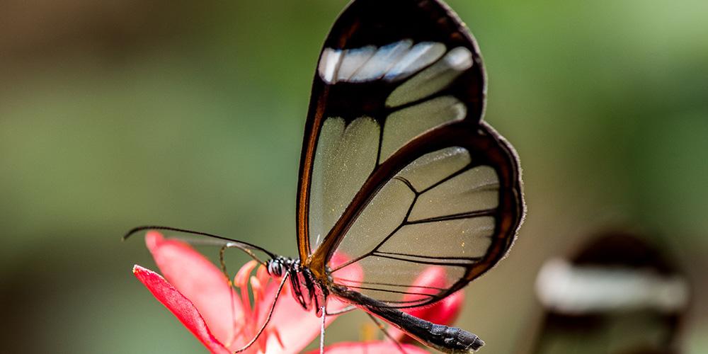 Weirdest Butterflies in the World - feature image