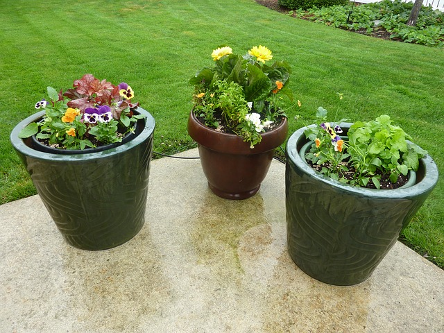 Container soil - planters