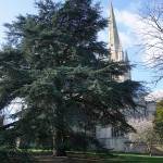 Norwich Cathedral gardens