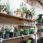 Plant Den