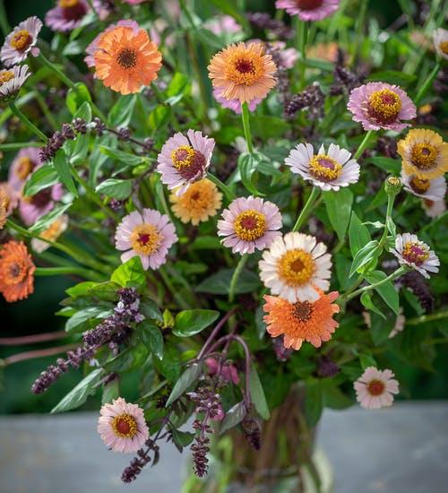 Cinnamon Peach Cut Flower Collection