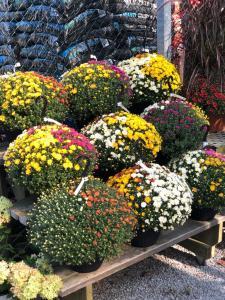 Autumn container gardening
