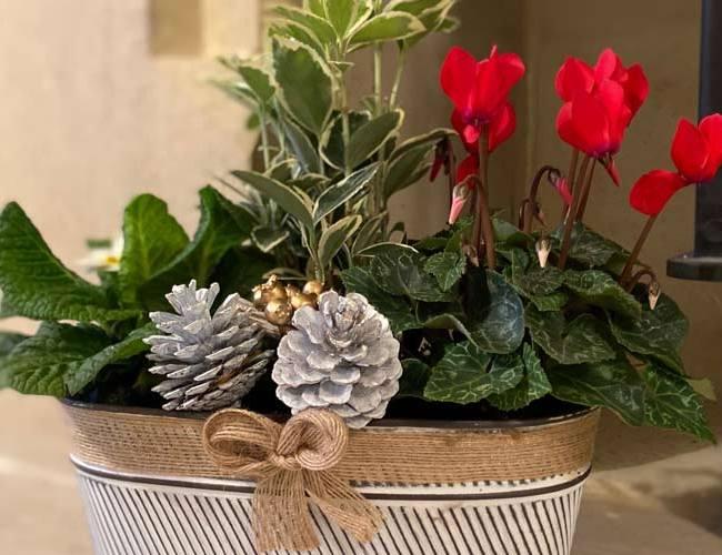 Christmas plant centrepiece - feature image