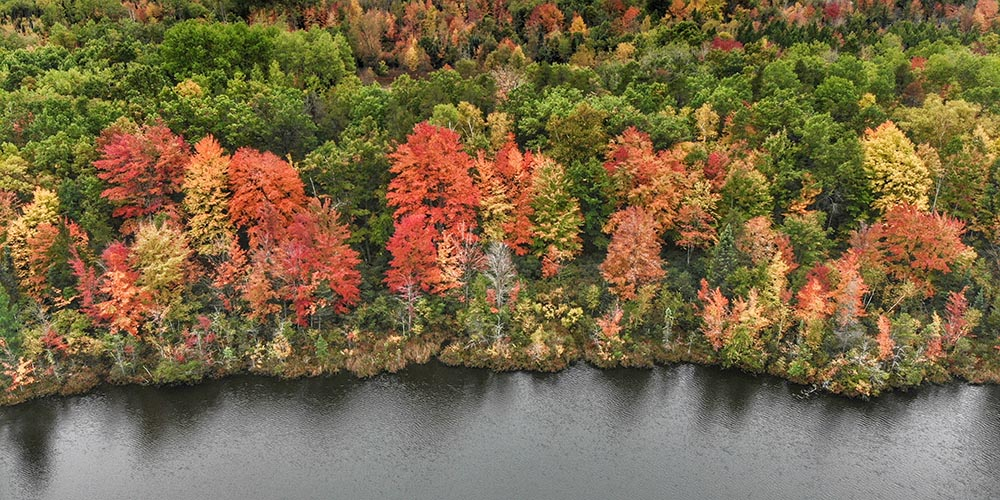 Leaf peeping feature image