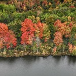 Leaf peeping feature image