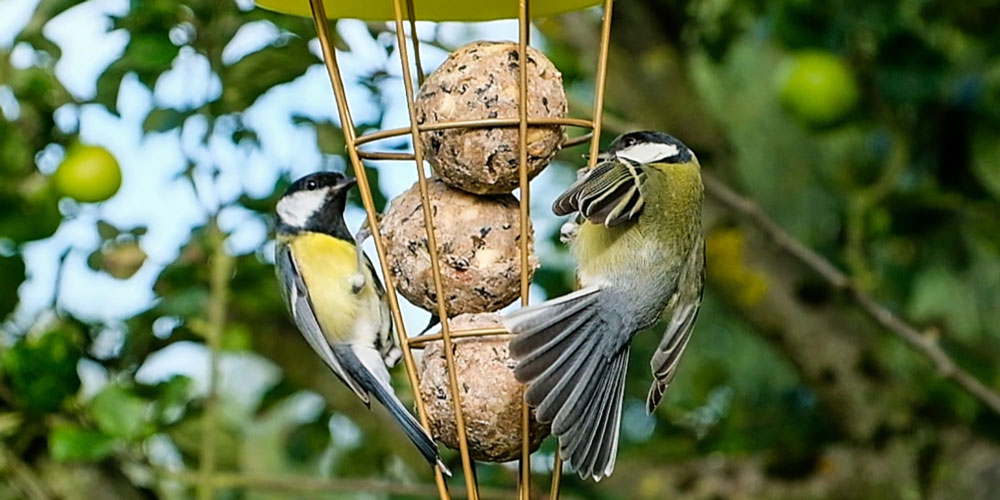 Why Birds Aren T Visiting Your Garden From Bird Food To Feeder Position