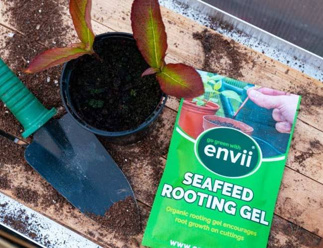 Envii SeaFeed Rooting Gel