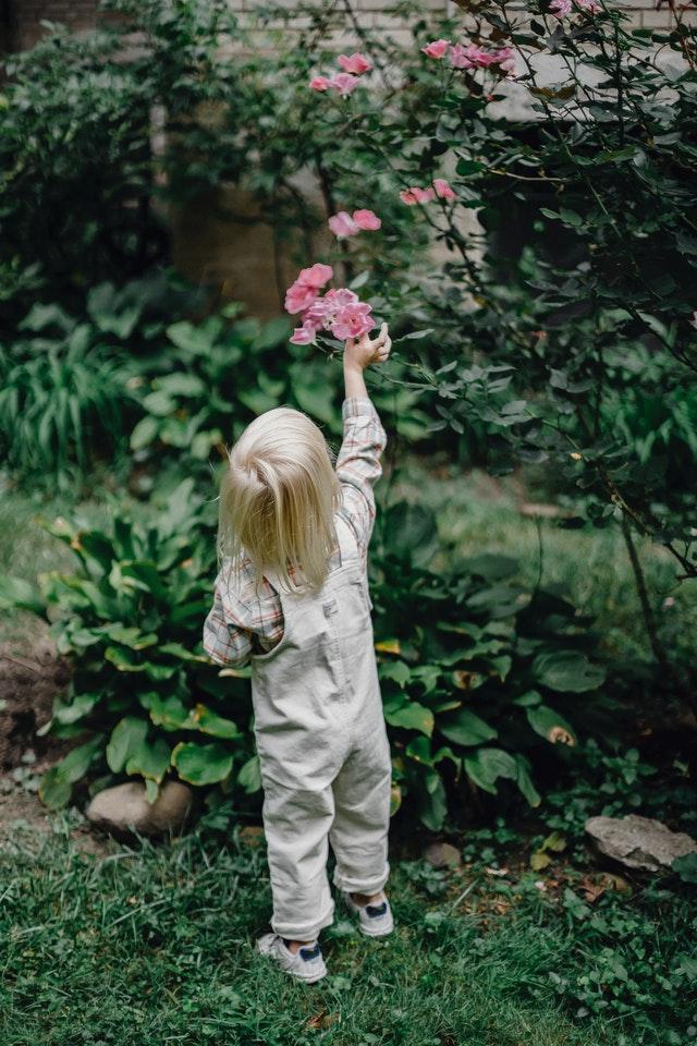 How to create a sensory garden at school