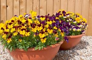 Garden ready scented bedding collection