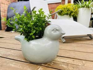 bird planter