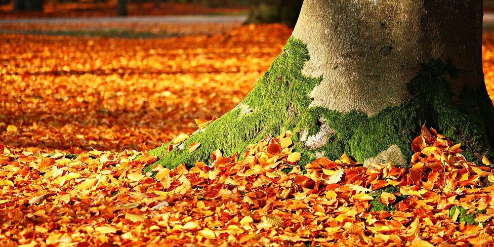 5 autumn gardening jobs