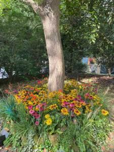 Autumn colours in plants