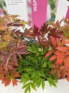 Fading plants