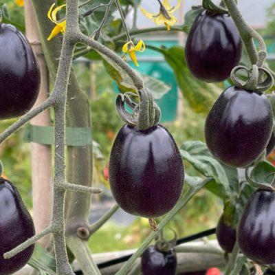 New Vegetables 2021