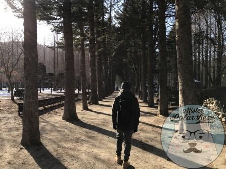 首爾自由行,冬季南怡島,南怡島杉樹路