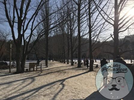 首爾自由行,冬季南怡島,杉樹路