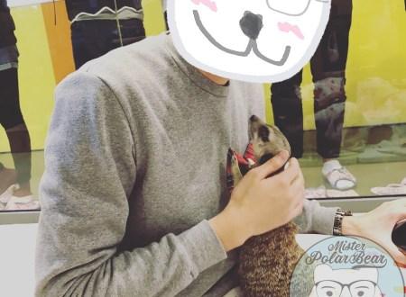 meerkat cafe, meerkat, koreacafe, seoul cafe5