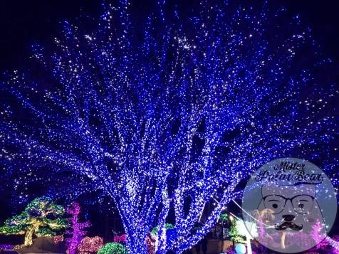 晨靜樹木園,아침고요수목원,五色星光展,樹木園,夜景