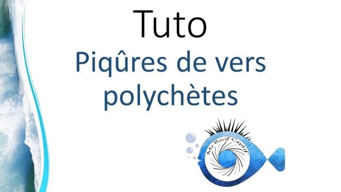 polychètes
