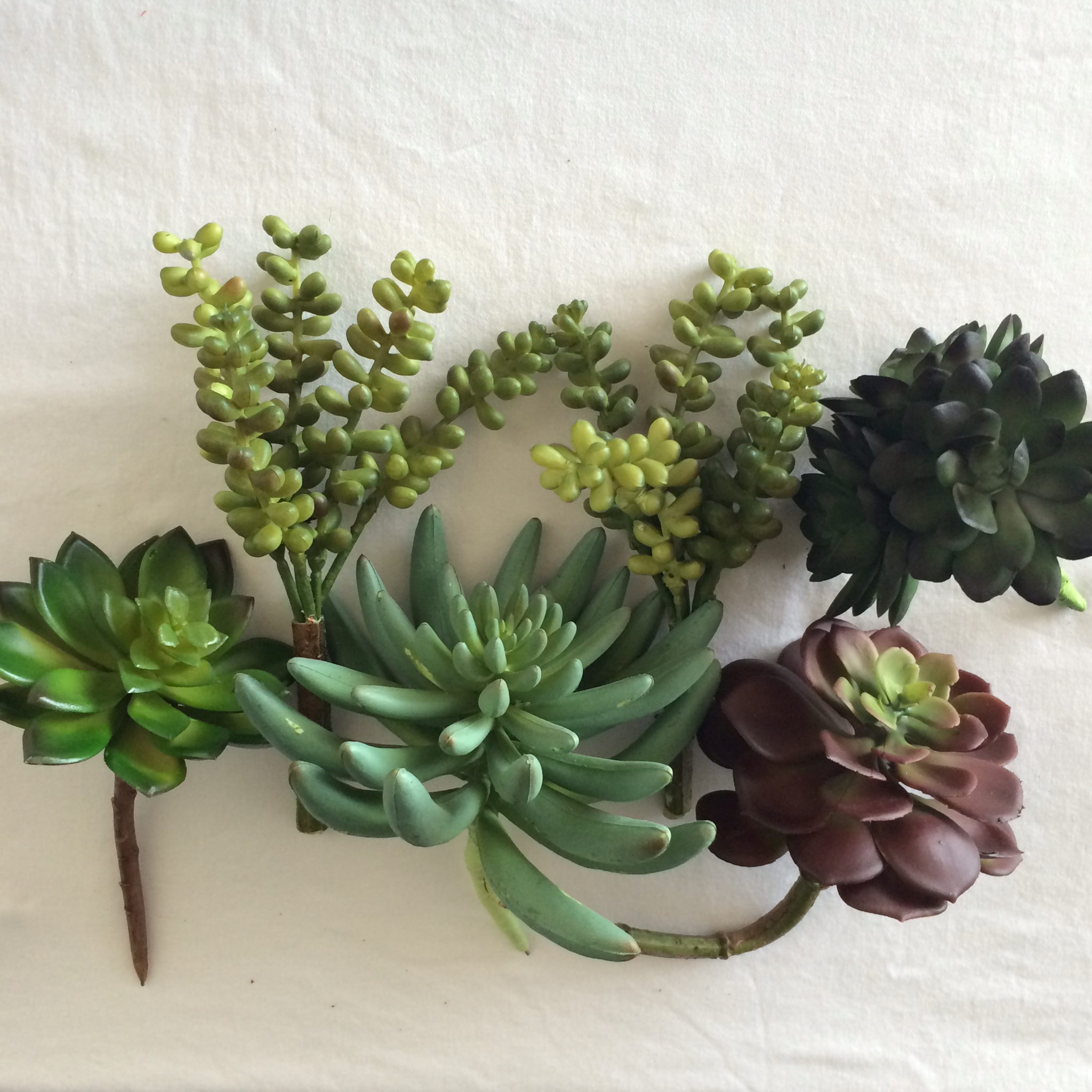 Succulents   Mrs Amber Apple blog