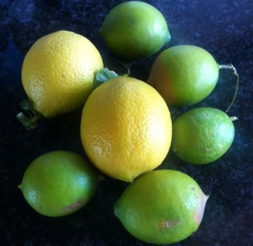 Lemons and limes off our trees a few months back