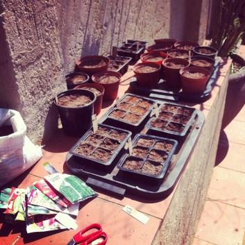 Some of my seedlings