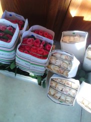 Garden roses pre-preparation