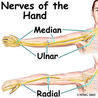 Nerve of the Hand