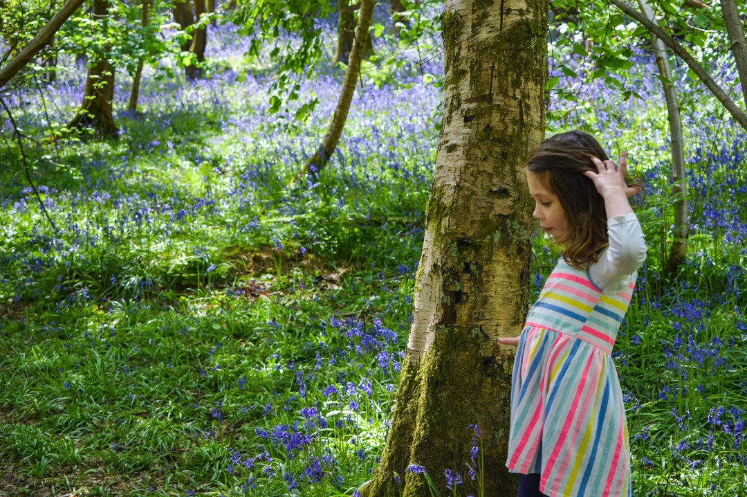 walking through the bluebell woods i learnt something about parenting and life. I learnt a valuable life lesson. Parenting lessons from bluebells - Mrs H's favourite things