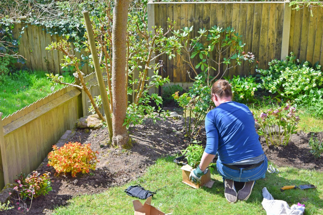 A photograph of a woman planting a flower in her garden - Summer Gardens Are Made In Spring: Prep To Undertake Now - Mrs H's favourite things