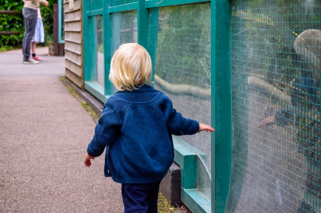 A photograph of a little boy at Paradise Wildlife Park - Paradise Wildlife Park - A Review - Mrs H's favourite things