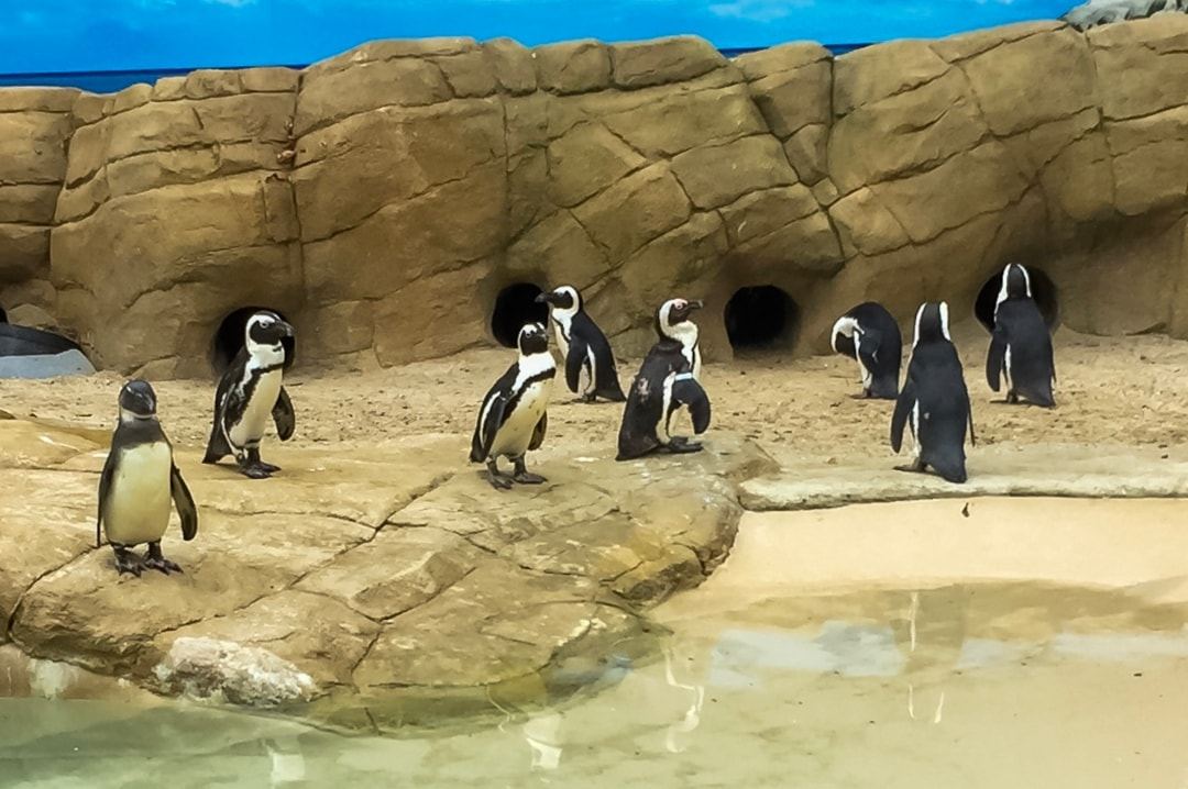 A pack of penguins at the Paradise Wildlife Park - Paradise Wildlife Park - A Review - Mrs H's favourite things